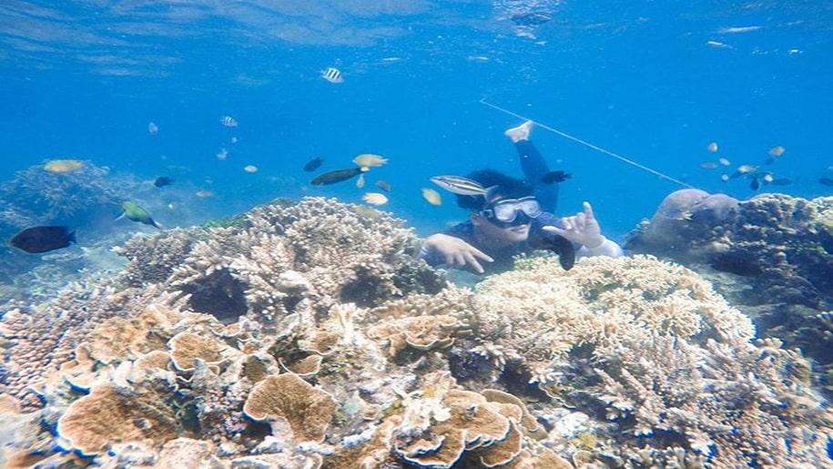 Snorkeling di Kepulauan Seribu