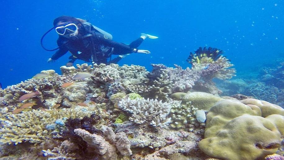 pulau seribu terumbu karang