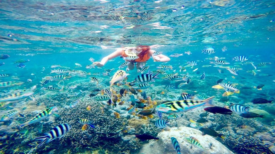 spot snorkeling terbaik